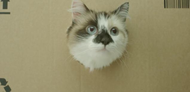 Sponsored Video: Witziger Clip mit Kultpotential: Netto ist auf die Katze gekommen