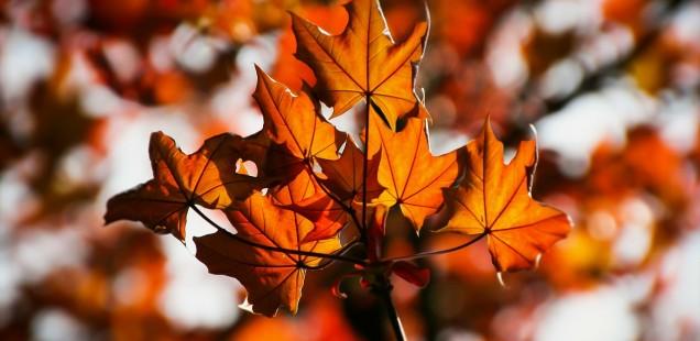 Herbstzeit ist Lesezeit: Herbstgeschichten zum Vorlesen für Kinder